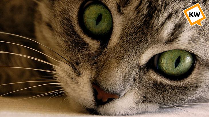cat_eye_kwtv